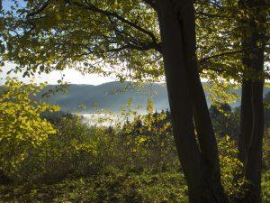 Paysage des Vosges du Nord