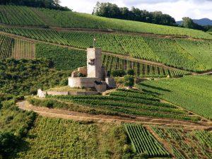 Vue d'ensemble du château du Wineck - Crédit : OT Kaysersberg